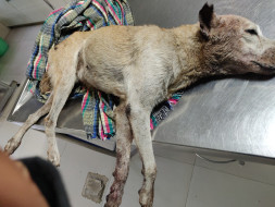 She wants to live. Will you help her?