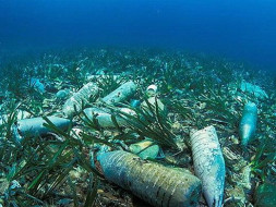Save the ocean and Marine Life from plastic