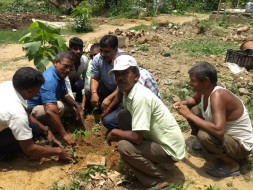 Plant Tree with Project Green Hand