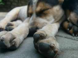 Help These Dogs Live A Better Life