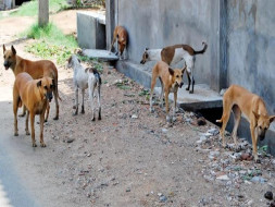 Home for Stray Dogs