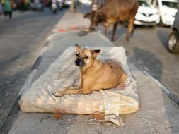 Dogs of Delhi - Sponsor a Stray