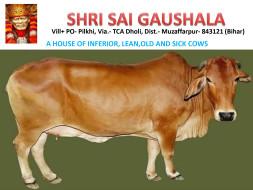 Help Us Build a Goushala