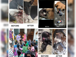 Help end Animal suffering and educate Young Minds
