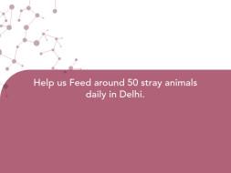 Help us Feed around 50 stray animals daily in Delhi.