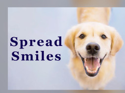 Spread Smiles, Feed and Help The Stray Pups