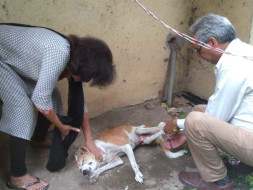 Help Neelam & team CWSHA rescue & assist stray animals in Bhopal