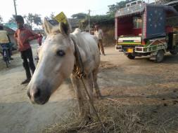Help 'Spirit' retire in Dehradun