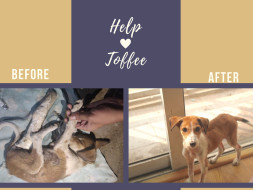 Help Toffee Reach Her Forever Home!