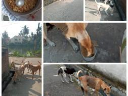 Help Me Save the homeless dogs of Chandannagar