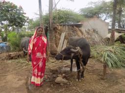 Gangavva Vittal Asode