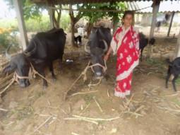 Mahadevi Yallappa Misi