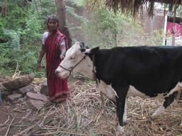 Siddavva Santappa Harijan