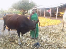 Shidlavva Bhimappa Halakal