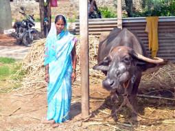 Bhagirati Ramachandra Chaluvadi