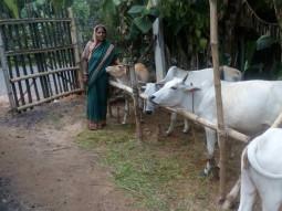 Jharana Pagal