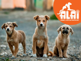 help-alairescues