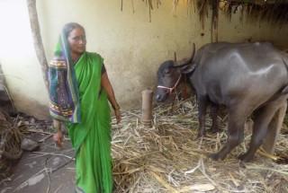 Sumitra Bahu Naduvinakeri
