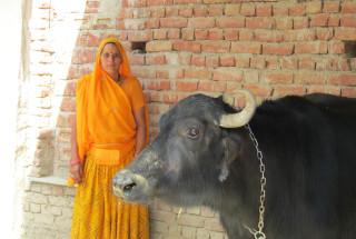 Suraj Devi