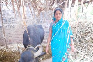 Janabayi Siddavva Harijan