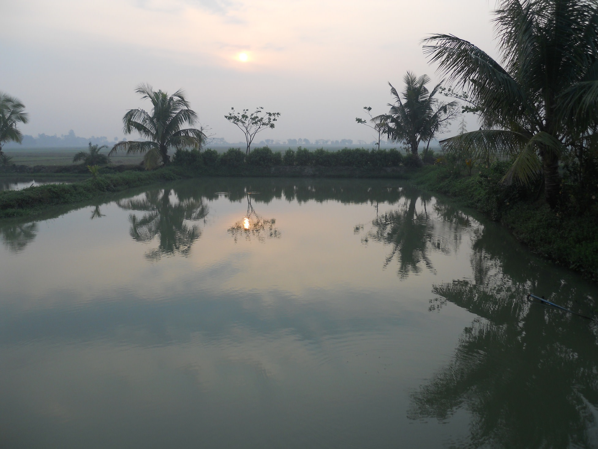 Typical Bengali fishpond right outside the guesthouse being lit up by a beautiful sunrise.
