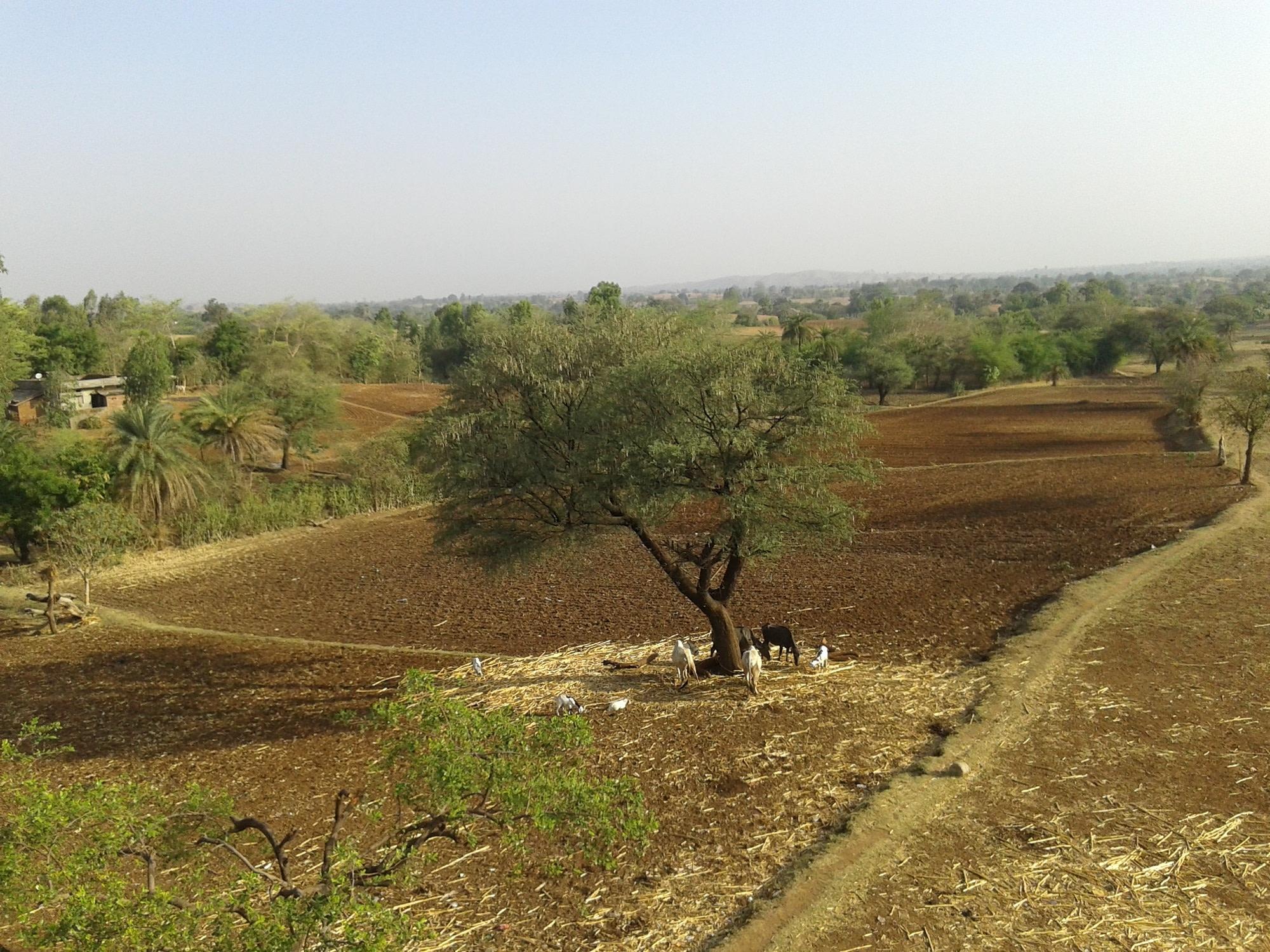 Bhabhra