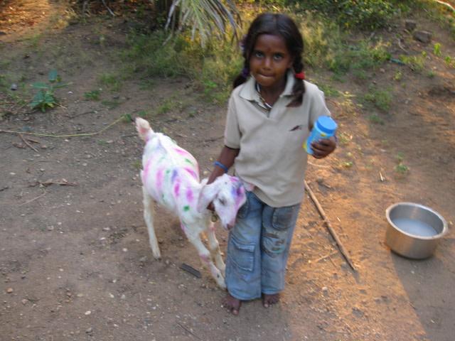 The goat, Ramukutty