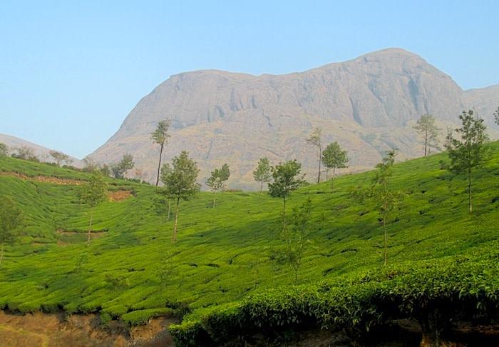 Tea and Mountain