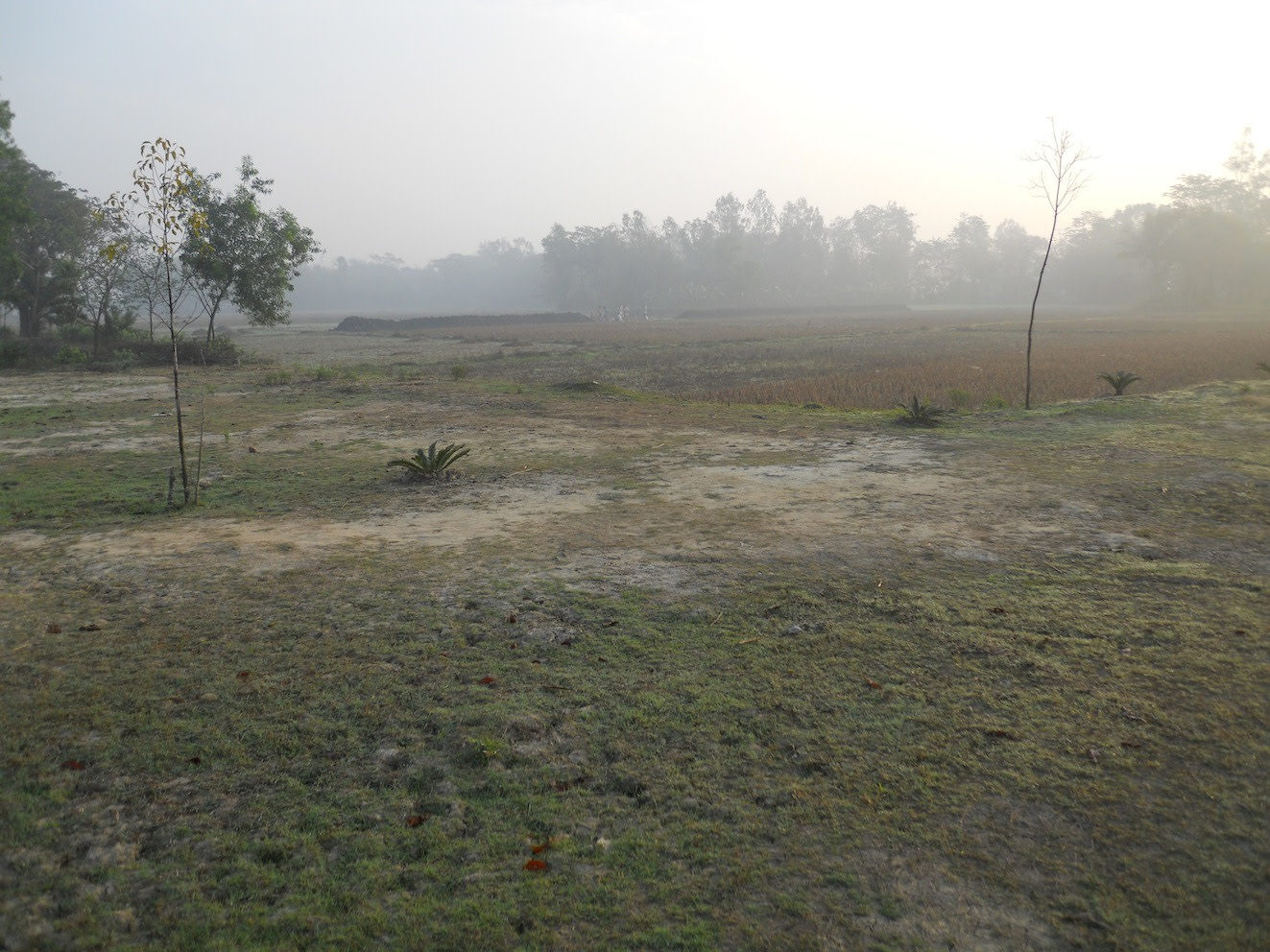 Another view of the rice fields at dawn for your viewing pleasure.