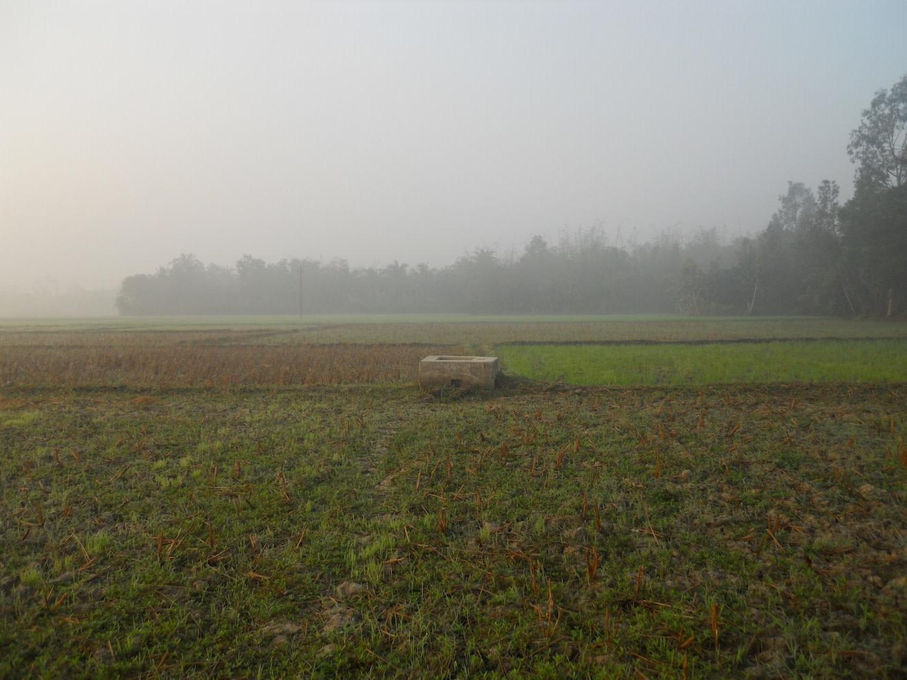 Adjacent rice fields being mildly enveloped in morning mist.