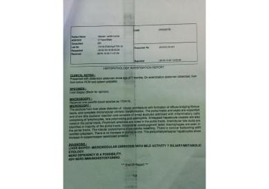 histipathology report of liver