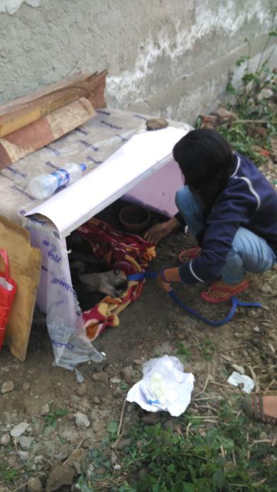 Shelter home
