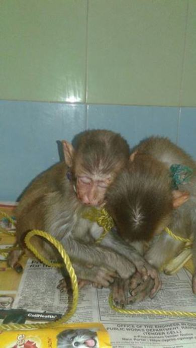 Minnie and Macho when rescued