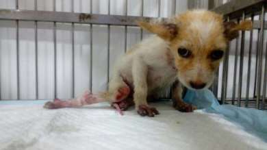 Sammy Pic - Who suffered from Spinal Injury and Lice Infection.