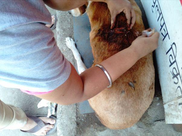 Healing of Rani a senior stray