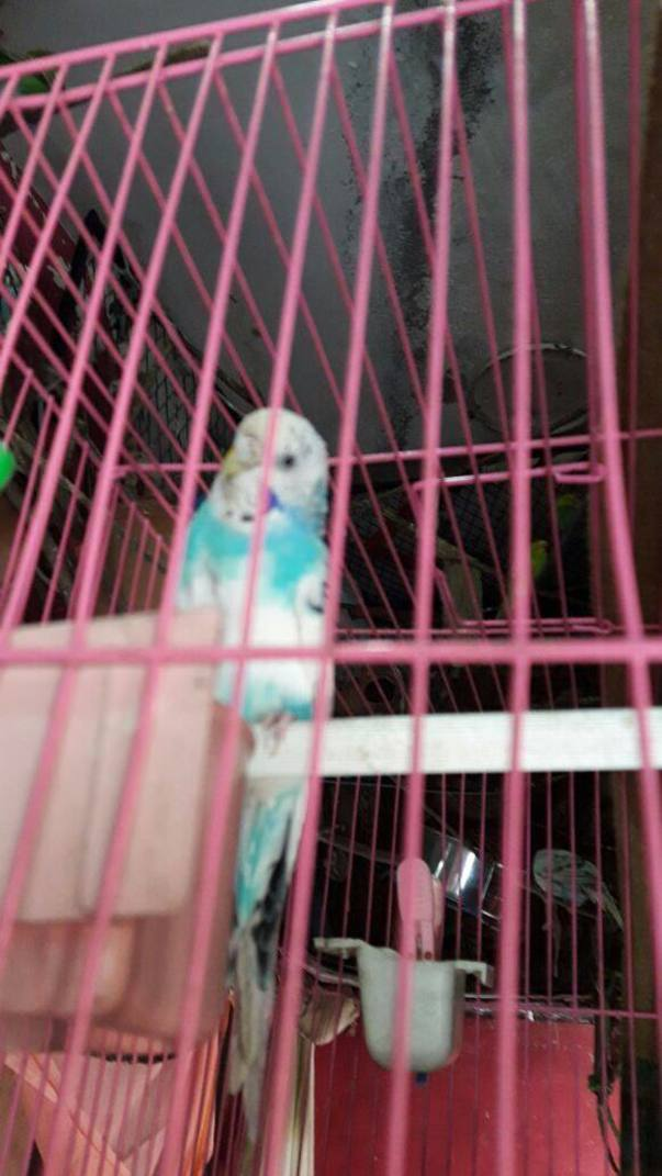 One eye bird