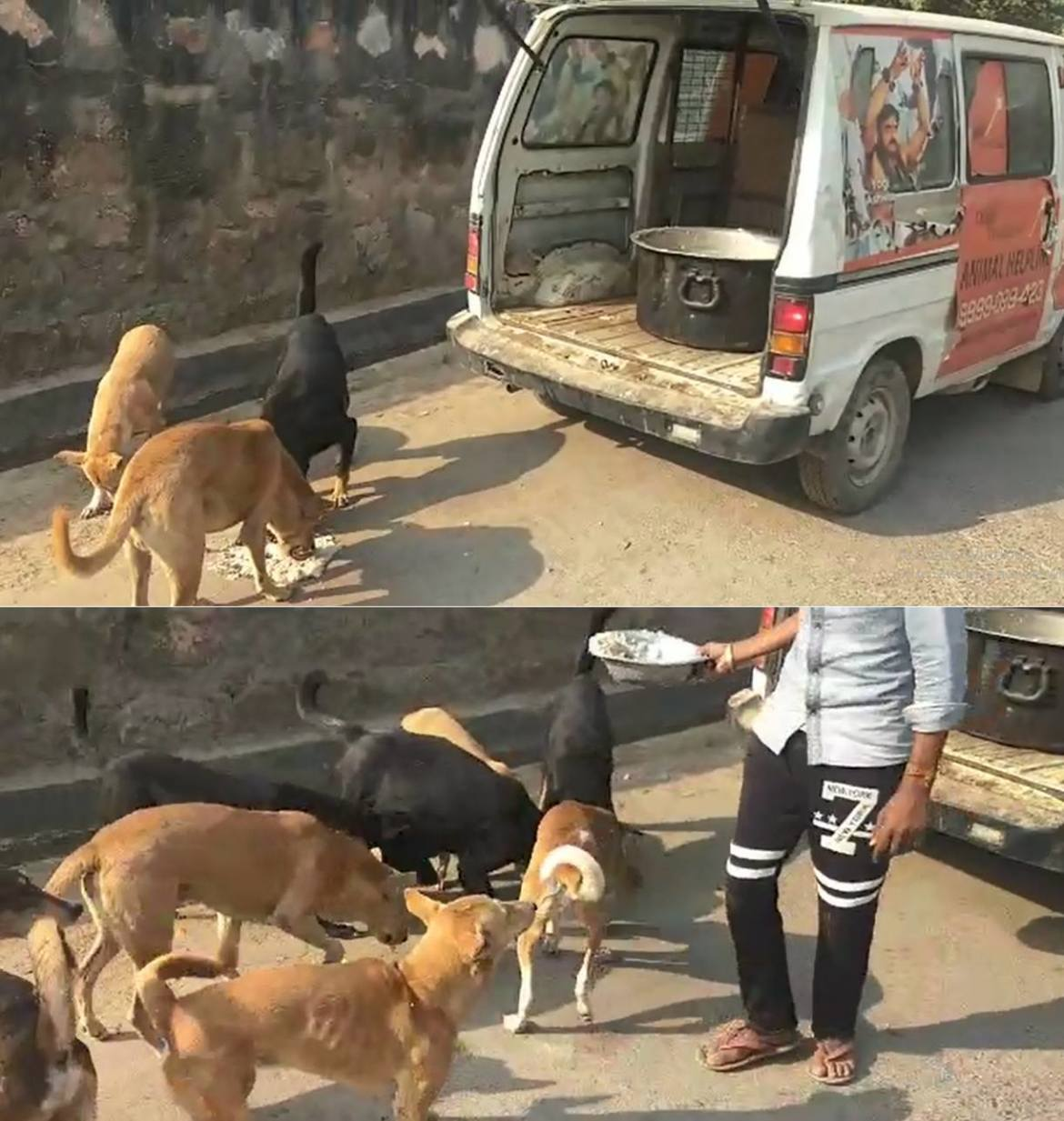 STRAY DOGS NEED YOUR HELP | Milaap