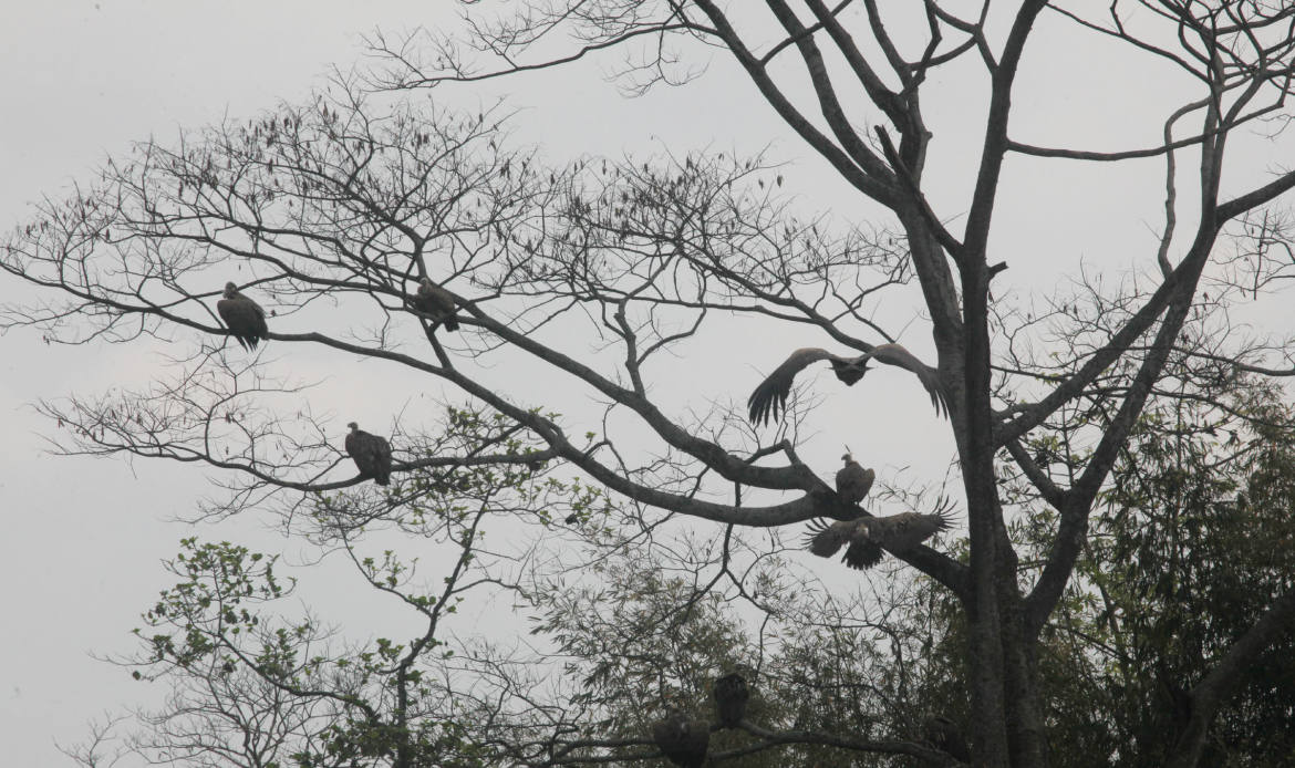After releasing the birds they are relaxing in tree
