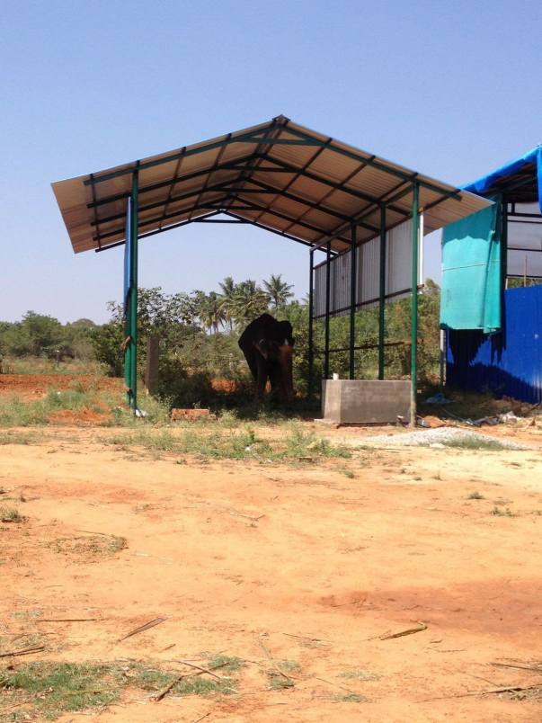 Help Rescued Elephant Lakshmi Reach Her Forever Home | Milaap