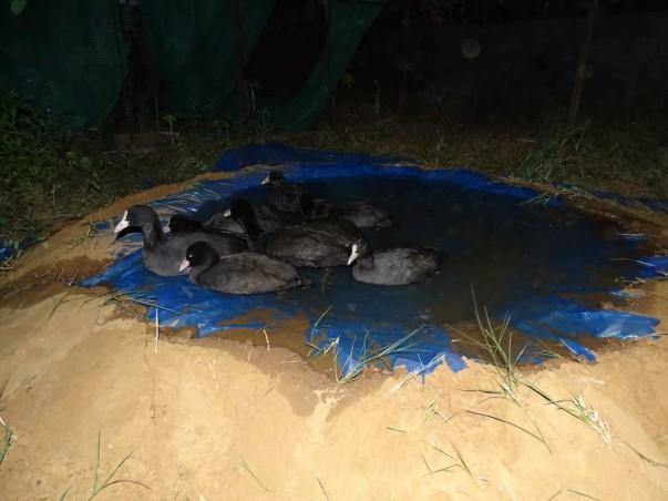 Wildlife Emergency as Thousands of Birds Die in Sambhar Lake