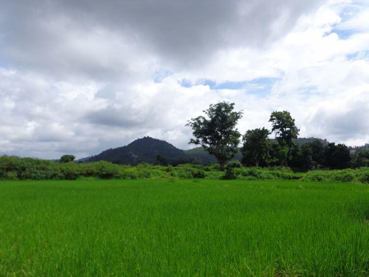 Gumla and it's rolling paddy fields