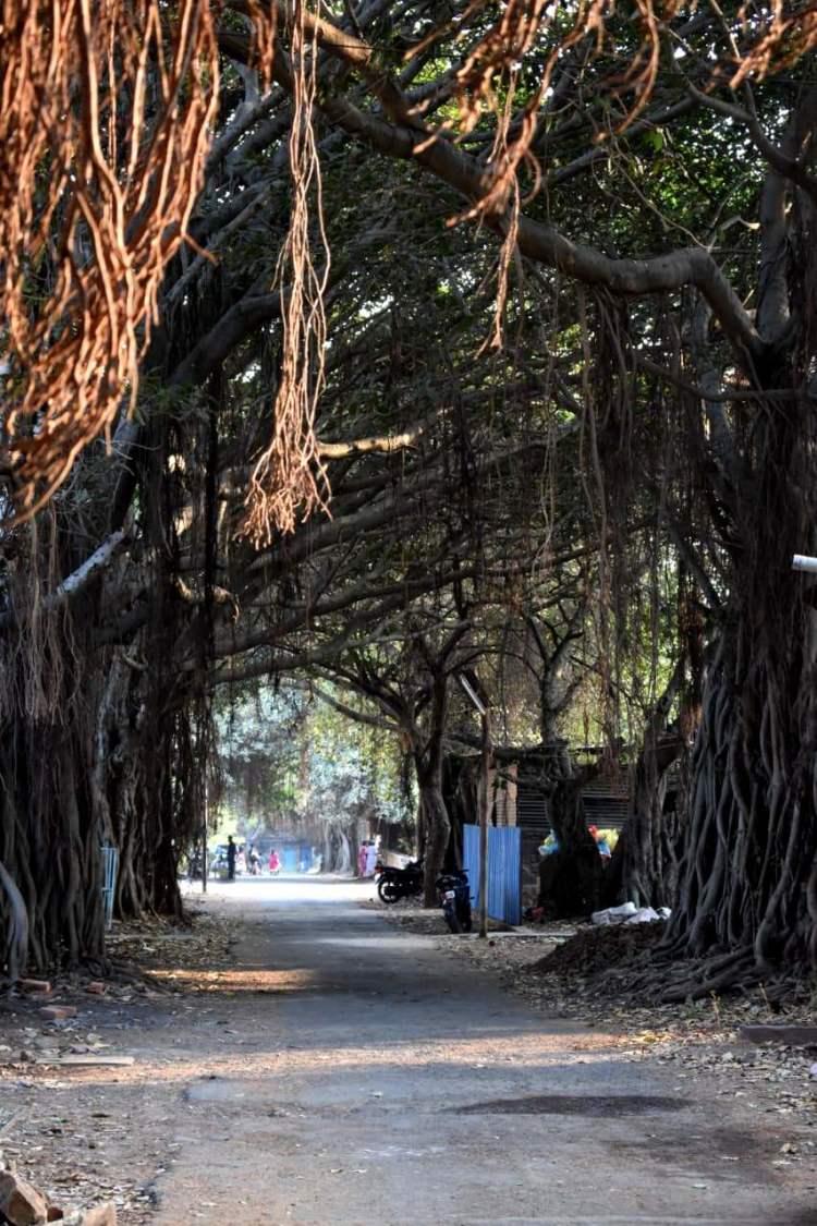 The treeline walkway is truly a beautiful sight!