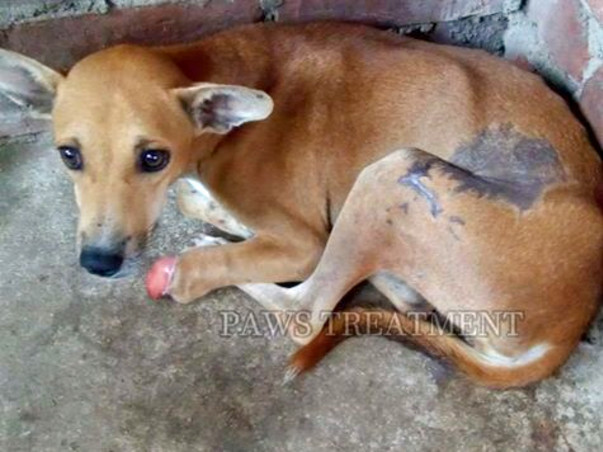 Help Build A Shelter For Injured Street Dogs