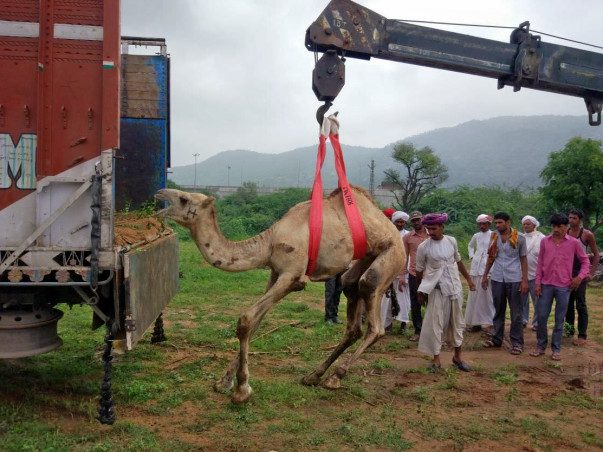 Help DhyanFoundation #HelpTheVoiceless