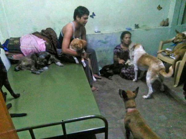 40 Paws need a shelter