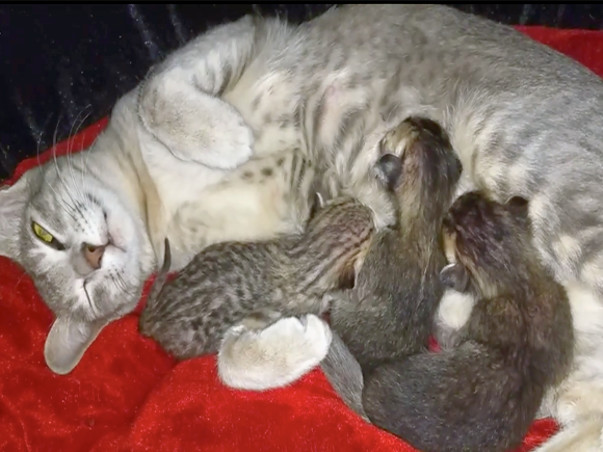 Save Angel And Her 3 Kittens From Going Homeless