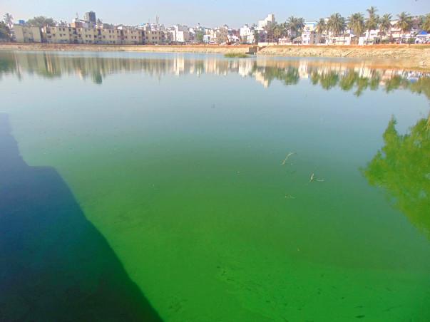 Bengaluru Marathon: Restoration of Byrasandra Lake, Jayanagar