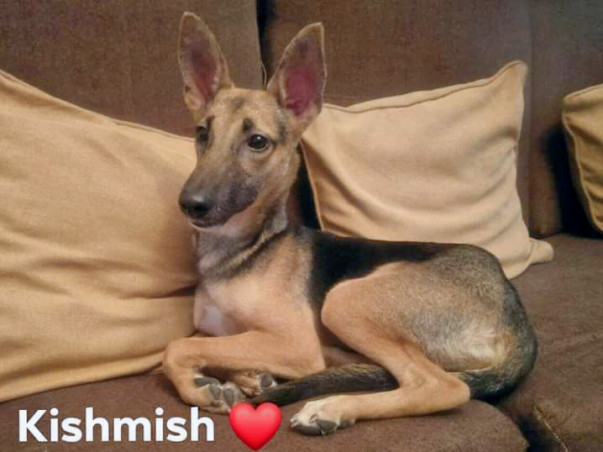 Help Search and Rescue KISHMISH