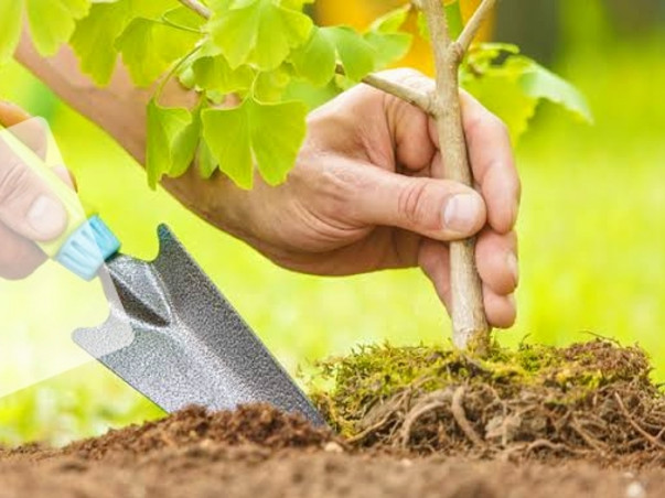 Help Us Plant Trees And Make Greenery Everywhere