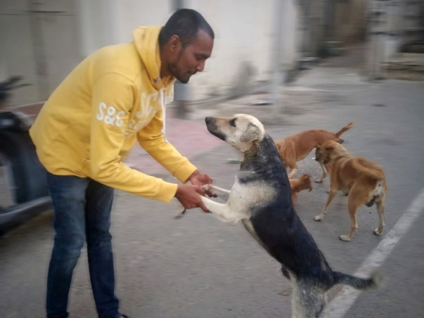 Help 'JeevAsra' Provide A Better Life To The Indian Stray Dogs